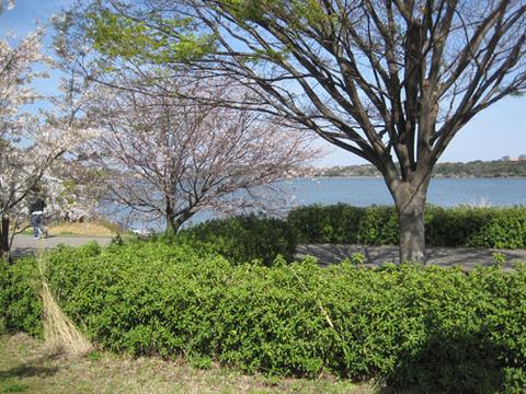 佐鳴湖公園.jpg